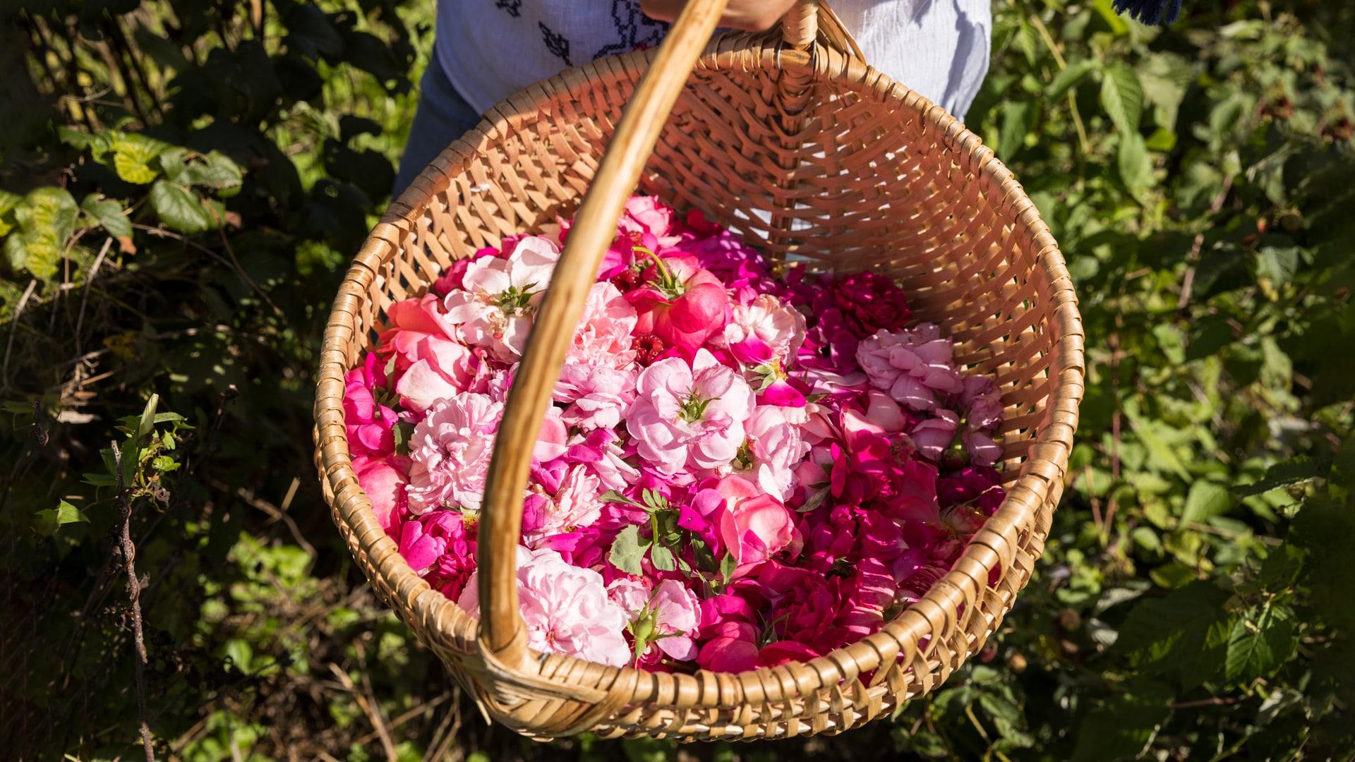Come si fa la composta di rose